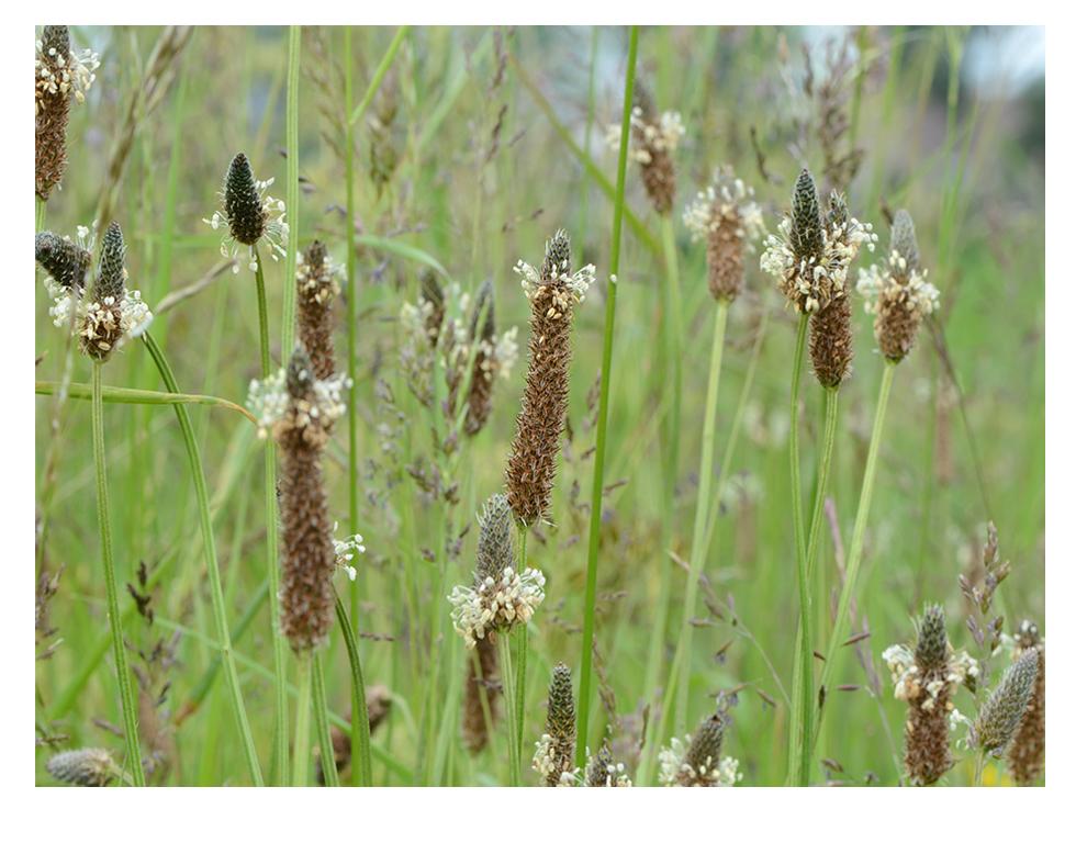 Kruiden, grassen en zaden
